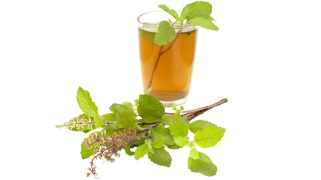 Tulsi Water For Weight Loss