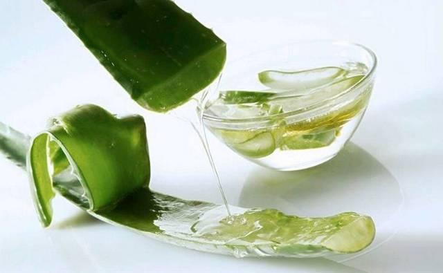 Aloe Vera For Itchy Scalp