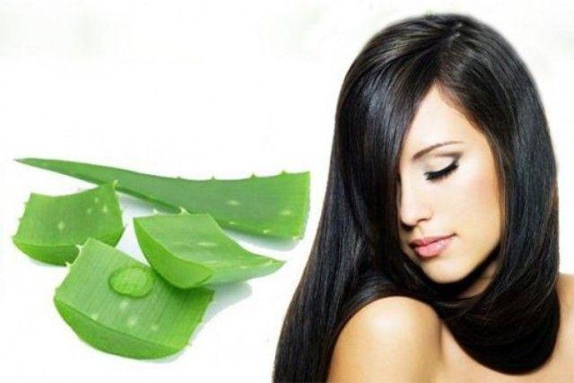 Aloe Vera Promotes Hair Growth