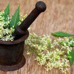 19 Neem Oil Benefits for Hair, Skin & Health